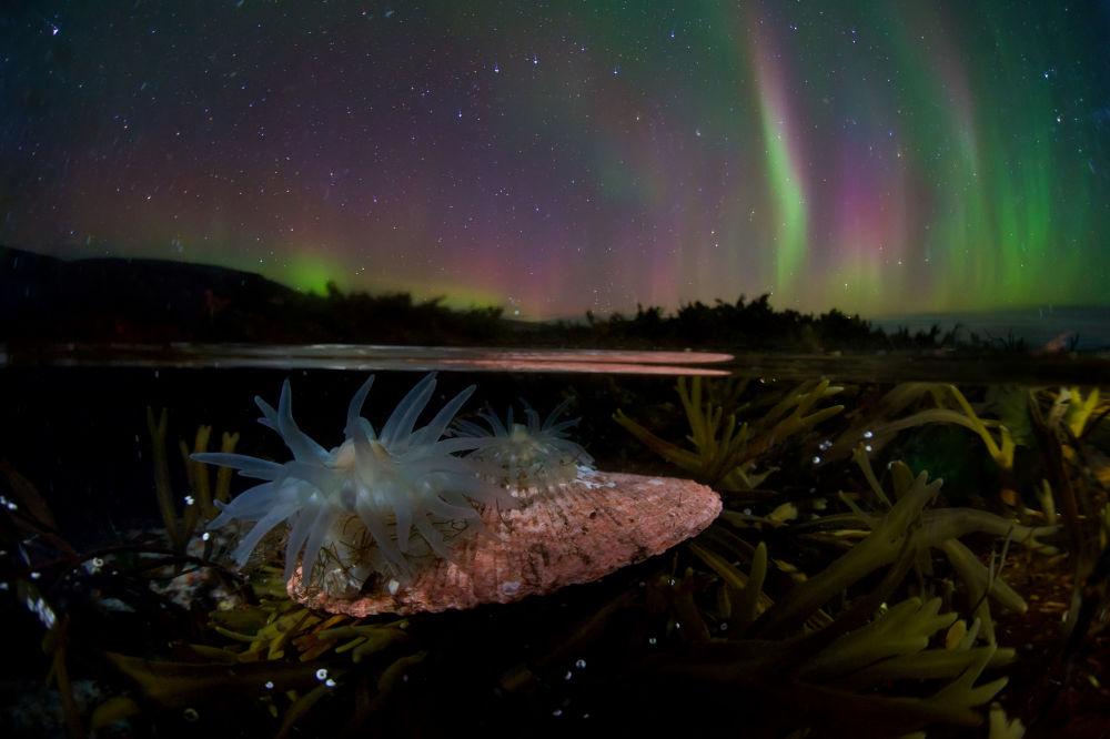 صورة بعنوان تحت غطاء الليل (Under cover of night)، للمصور الروسي إيغور نيكيفوروف (Egor Nikiforov)، الحائز على جائزة الإشادة بشدة في فئة زاوية عريضة