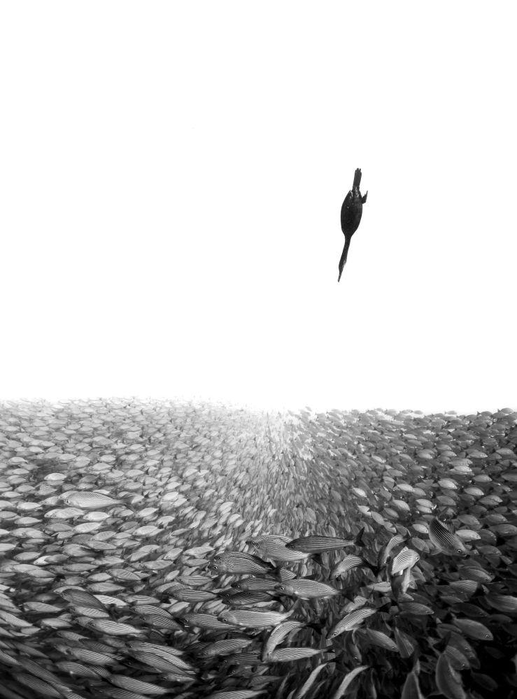 صورة بعنوان بين عالمين (Between Two Worlds) للمصور الفلبيني هينلي سبايرز (Henley Spiers)، الفائز في فئة أبيض وأسود