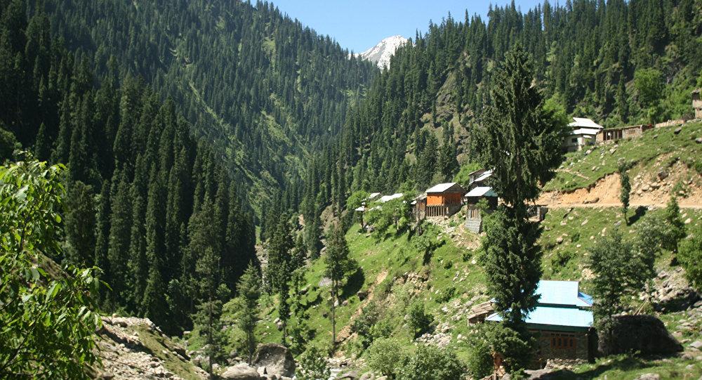 منظر طبيعي، خضار في وادي نيلوم، لمنطقة كشمير التي تخضع لسيطرة باكستان، 2013