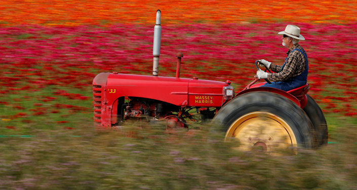 حقول الزهور في كاليفورنيا