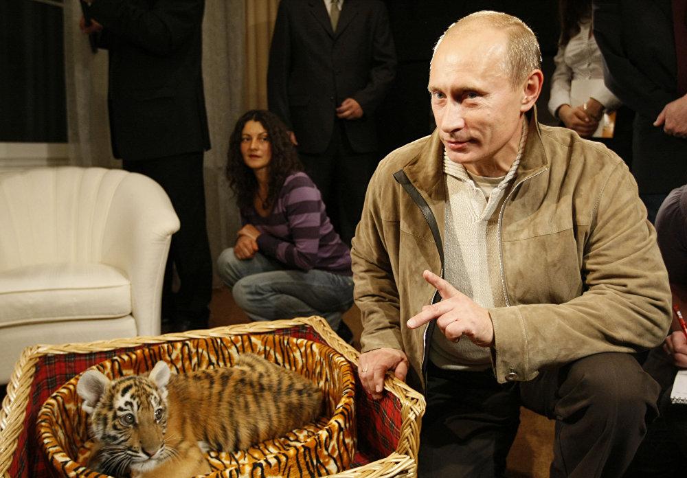 هدية للرئيس الروسي فلاديمير بوتين النمر ماشا