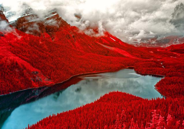 صورة فوتوغرافية بعنوان المخملية الحمراء (Red Velvet)، للمصور هيلين برادشاو، الحائزة على المرتبة الثانية في فئة التصوير لون الأشعة ما تحت الحمراء (Infrared Color)
