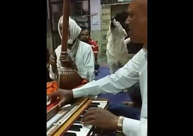 كلب يغني بداخل معبد هندوسي