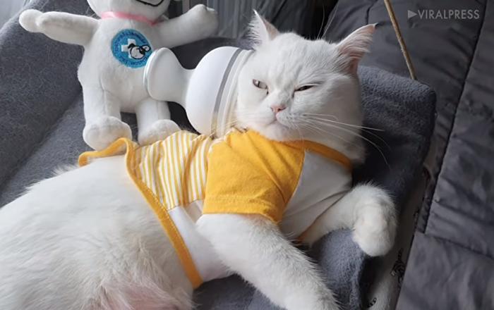 قطة تذهب إلى عالم الأحلامباستخدام المدلك الكهربائي