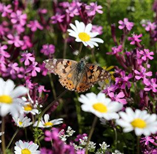 فراشة ملونة تقف على زهرة في حقل بقرية مروج