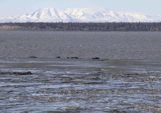 ثلوج في ولاية آلاسكا الأمريكية