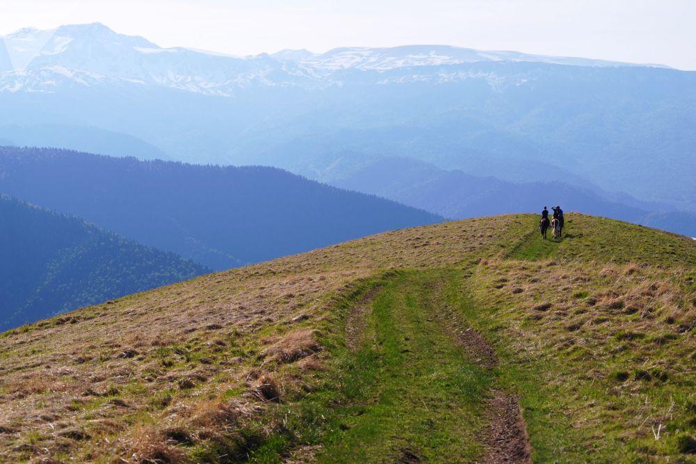 ركوب الخيل في مراعي أباغو في الجزء الشمالي من المحمية الطبيعية القوقازية باسم خ. غ. شابوشنيكوف