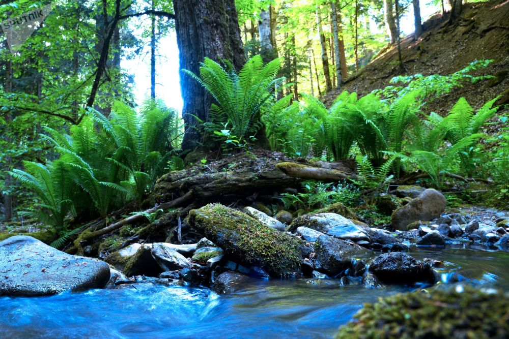 نهر جبلي في الجزء الشمالي من المحمية الطبيعية القوقازية باسم خ. غ. شابوشنيكوف