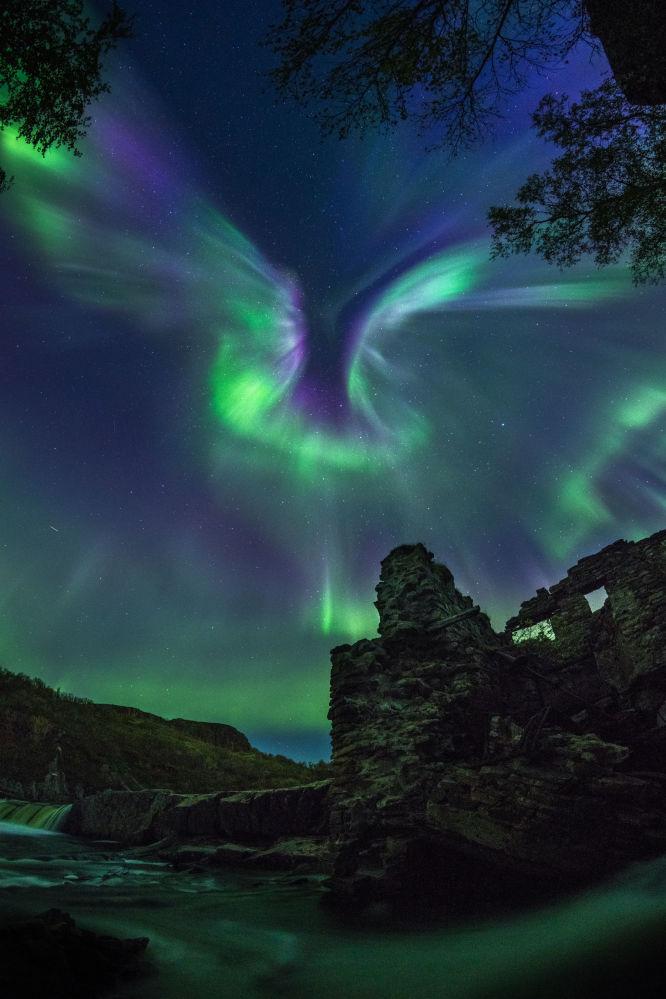 صورة بعنوان الشفق طائر من قبل المصور الروسي ألكسندر ستيبانينكو، ضمن القائمة القصيرة في مسابقة التصوير الفلكي الفوتوغرافي للعام 2019