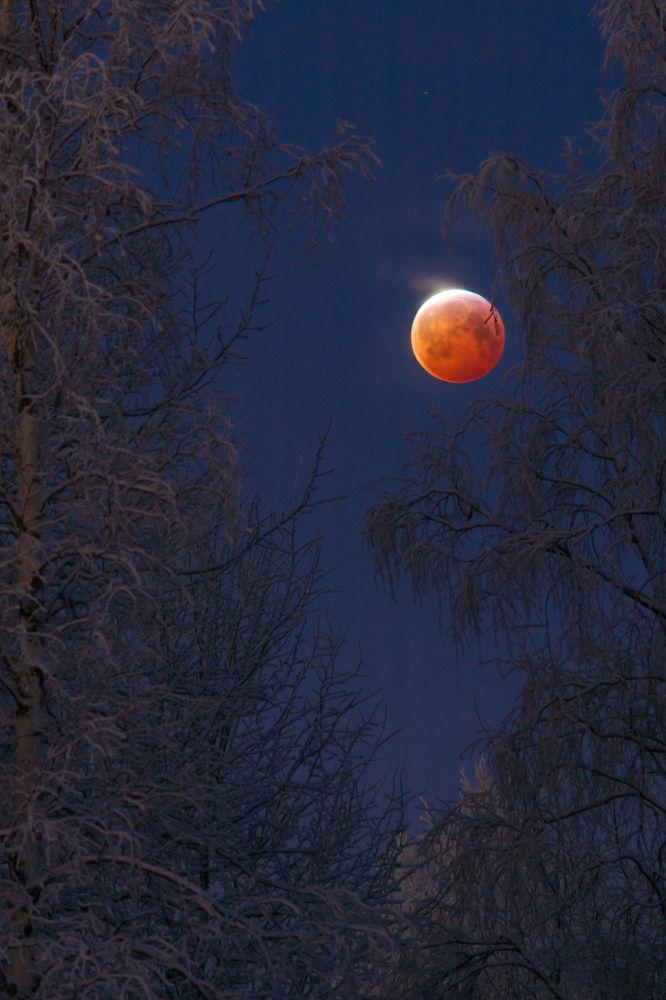 صورة بعنوان مولود أحمر من قبل المصور الفنلندي كيجو لايتالا، ضمن القائمة القصيرة في مسابقة التصوير الفلكي الفوتوغرافي للعام 2019