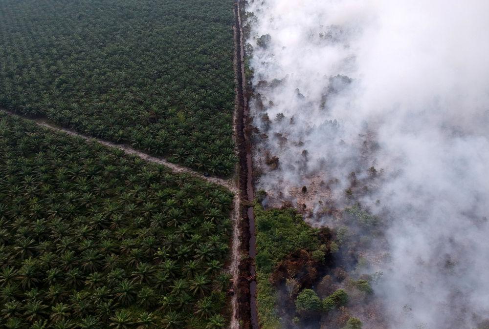 مشهد من السماء لحريق الغابات في موارزجامبي، إندونيسيا 30 يوليو/ تموز 2019