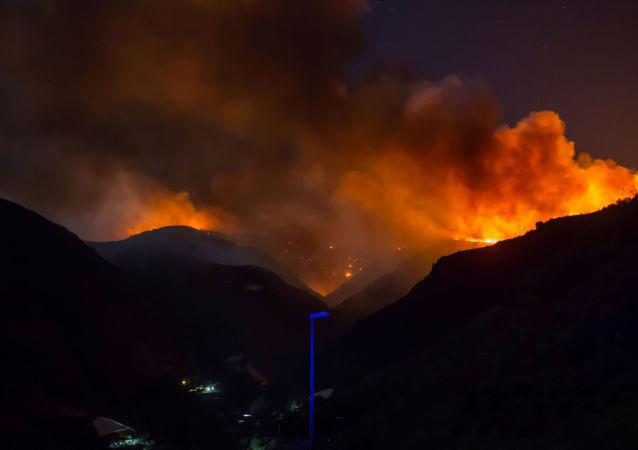 حريق غابات بجزر الكناري في إسبانيا