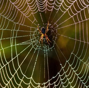 شبكة عنكبوت
