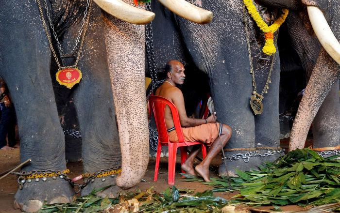 رجل يجلس بين الأفيال في مهرجان الحصاد أونام في الهند، 11 سبتمبر 2019