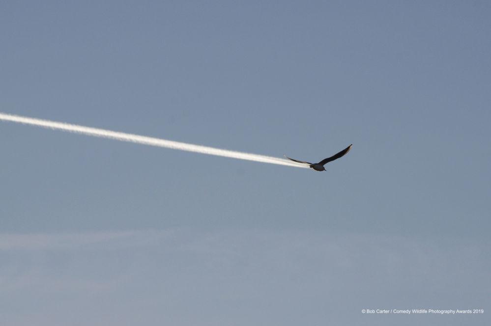 صورة بعنوان أهذا طائر، أم طائرة؟ للمصور البريطاني بوب كارتر