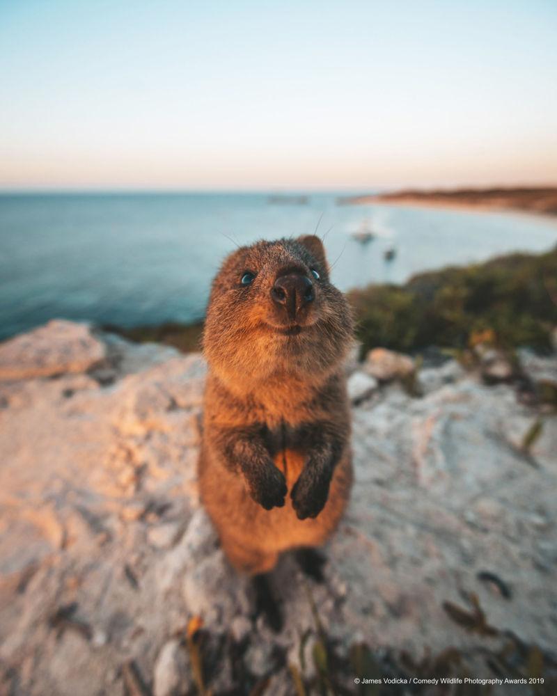 صورة بعنوان أعذرني!، للمصور الأسترالي جيمس فوديكا