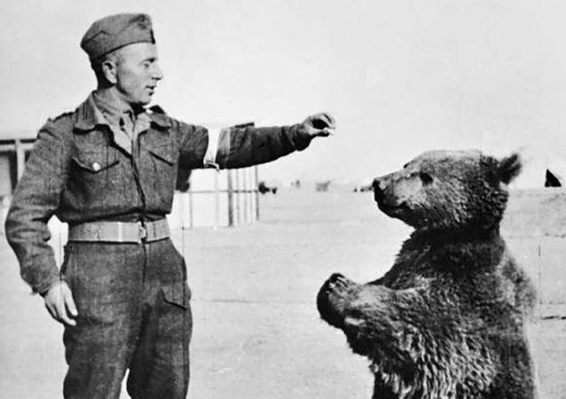 الدب السوري فويتيك مع الجندي البولندي