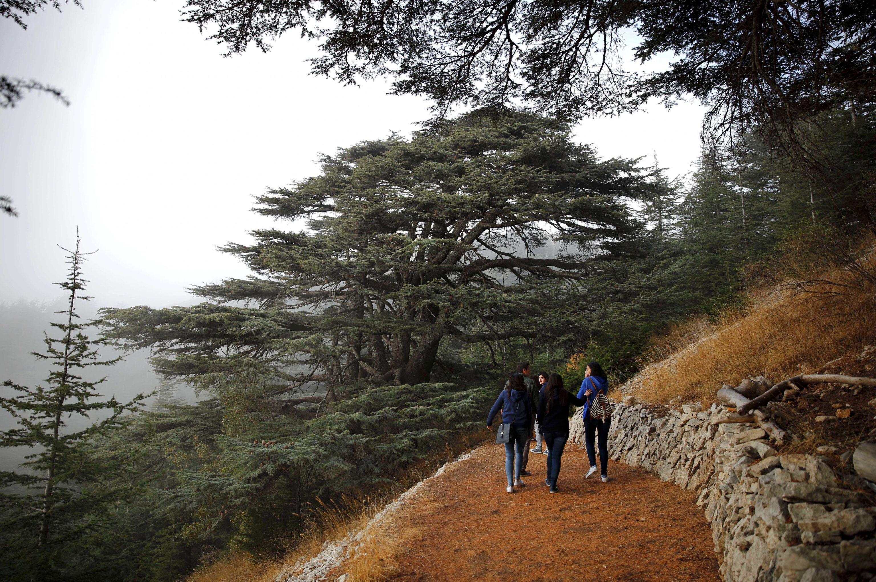 محمية الأرز في لبنان