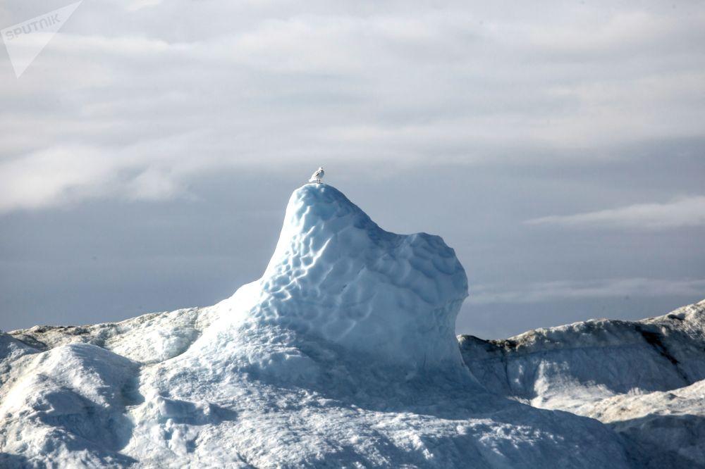 جبل جليدي في مياه جزيرة غرينلاند