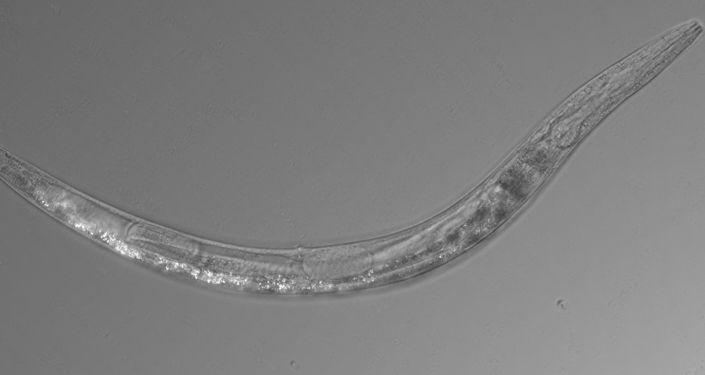 علماء يطيلون أعمار بعض الكائنات بعد اكتشاف إنزيم مضاد للشيخوخة… صور