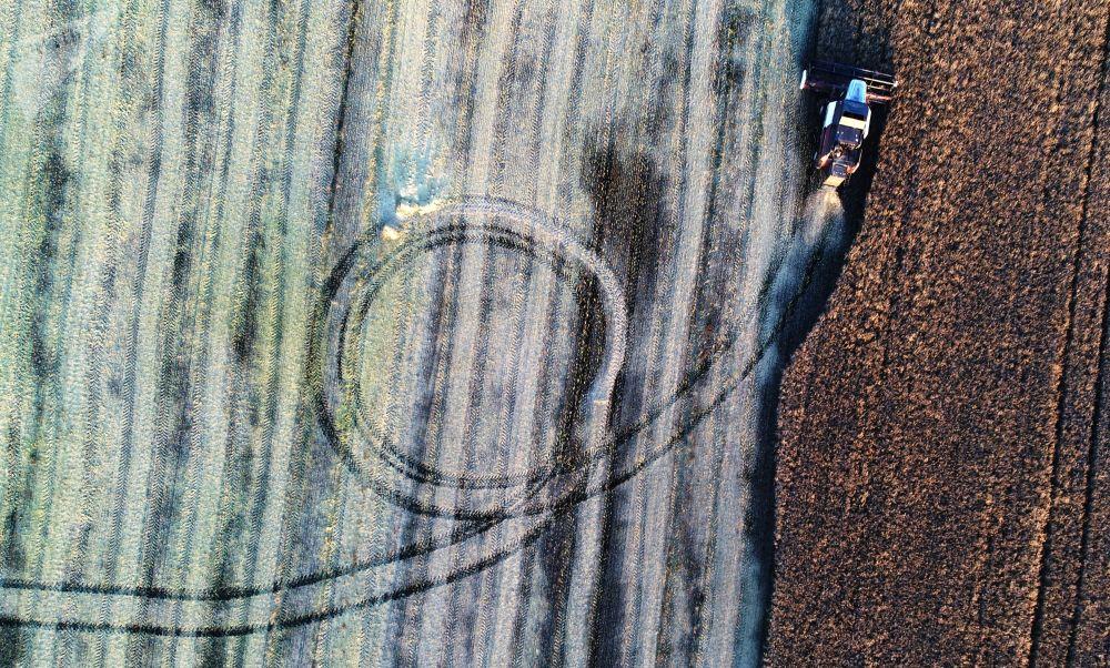 حصاد بذور اللفت في إقليم كراسنويارسك الروسي