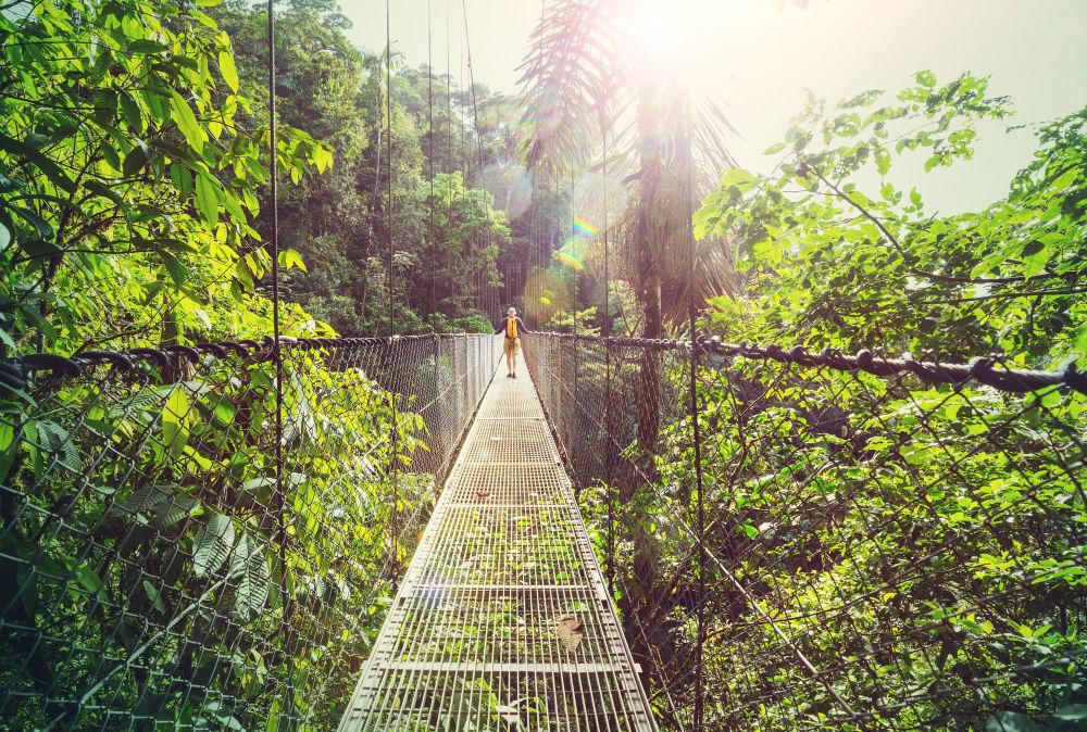المشي لمسافات طويلة في الغابة الاستوائية الخضراء، كوستاريكا، أمريكا الوسطى