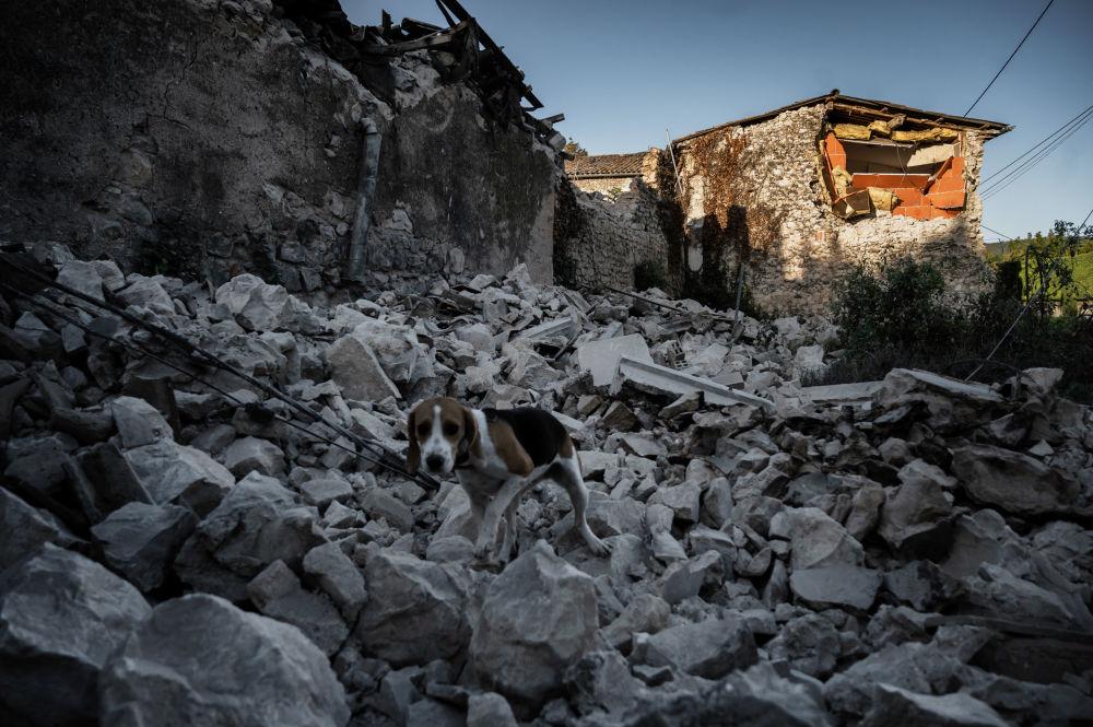 كلب على أنقاض منزل بعد زلزال وقع في حي روفيير في لو تيل في جنوب شرق فرنسا، 12 نوفمبر 2019