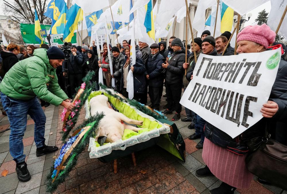 خنزير ميت في كفن خلال احتجاجت موظفي الزراعة وأصحاب الأملاك في كييف، أوكرانيا  13 نوفمبر 2019