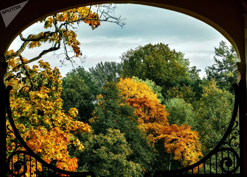 ألوان الخريف في منتزه القصر أورانيينباوم في سان بطرسبورغ الروسية