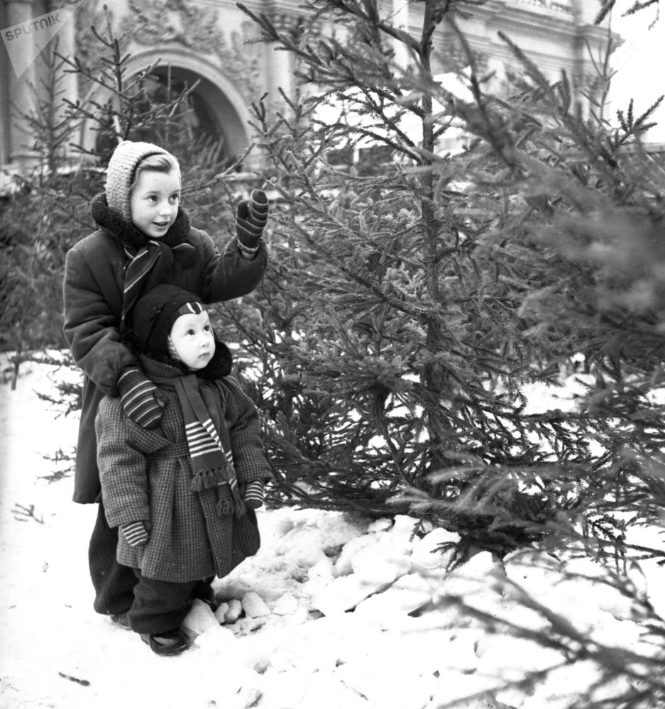 أفطال يلعبون بالثلج في سوق لبيع أشجار الميلاد، قبيل رأس السنة، عام 1956
