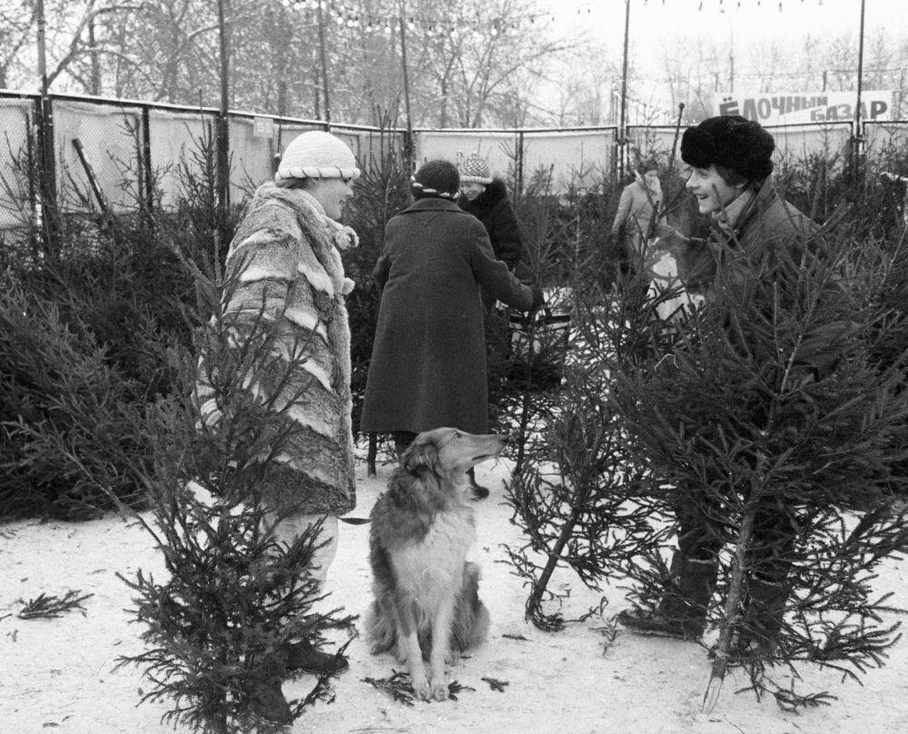 أهالي موسكو يختارون  أشجار عيد الميلاد في السوق عشية رأس السنة الجديدة، عام 1987