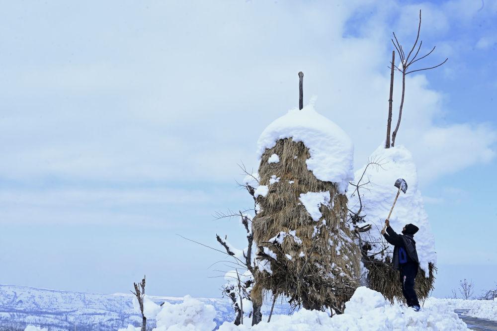 قروي يزيل الثلج من القش بعد تساقط الثلوج الكثيفة في منطقة كانيداجان في منطقة بودجام في سريناغار، الهند 18 يناير 2020