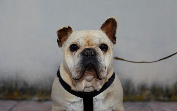 كلب يقوم بتصرف غريب لحماية نفسه من كورونا… فيديو