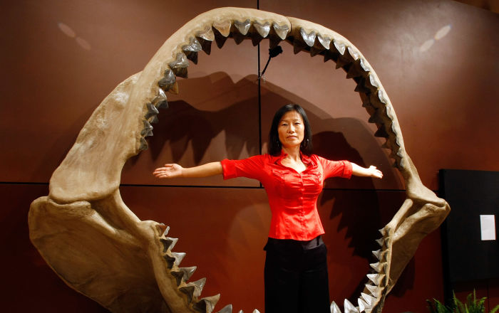 بحجم يد الإنسان… اكتشاف سن لسمكة قرش أثرية عملاقة… فيديو